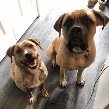 Abby(left) and her foster sister, waiting patiently for treats!  Abby is available for adoption and we will be accepting applications in the next few days!