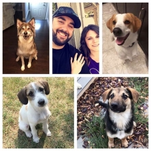 "Paige has been a volunteer for Prairie Sky since the beginning! Not only has she adopted two dogs through the rescue but her and Byron have also recently become foster parents!  Paige has this to say about her experience with us, ""I've been volunteeri"