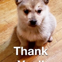 A huge THANK YOU 🙏🏽 to all the wonderful people who helped get our recent groups of dogs to safety with our rescue. We appreciate you very much and couldn't do this without all the incredible help we receive