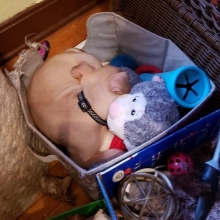 Jackson loves his toys so much he's decided to sleep with them in the toy box