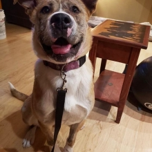 DID YOU SAY TREATS?! Jovie is now available for adoption! Head over to our website <a href=http://prairieskydogrescue.ca target=_blanc>http://prairieskydogrescue.ca</a> and fill out an application