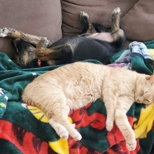 Bronte is taking cat naps to another level 😆💕 This cutie pie is still available for adoption. Applications can be filled out on our website <a href=http://prairieskydogrescue.ca target=_blanc>http://prairieskydogrescue.ca</a>