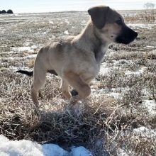 Conan is one happy pup to be playing outside!  Applications for Conan can be filled out on our website <a href=http://prairieskydogrescue.ca/our-team/available target=_blanc>http://prairieskydogrescue.ca/our-team/available</a>