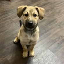 Conan is still available for adoption.  Applications for this handsome guy can be found on our website <a href=http://prairieskydogrescue.ca target=_blanc>http://prairieskydogrescue.ca</a>