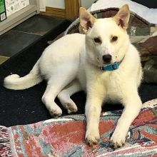 Winter (now Koda) has been adopted! Her new family says she is the perfect addition. Happy tails sweet pup!